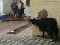 Animal en détresse